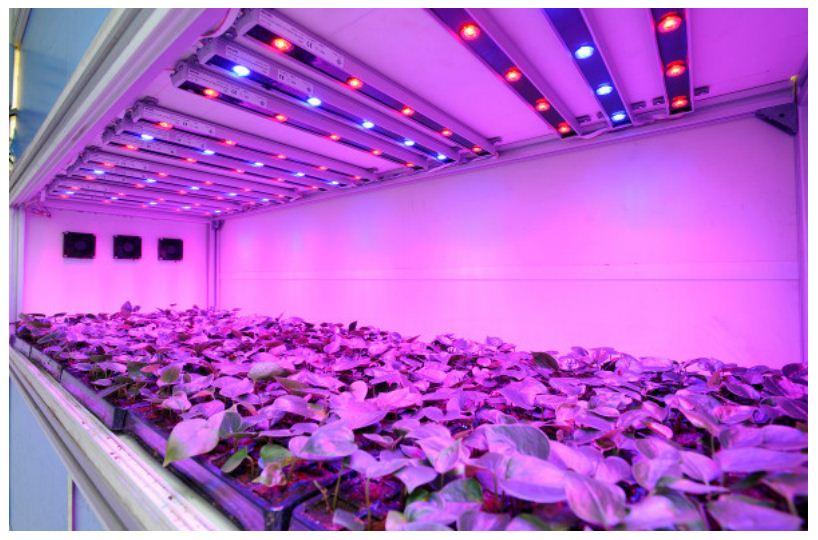 Светодиодные светильники для растений своими руками